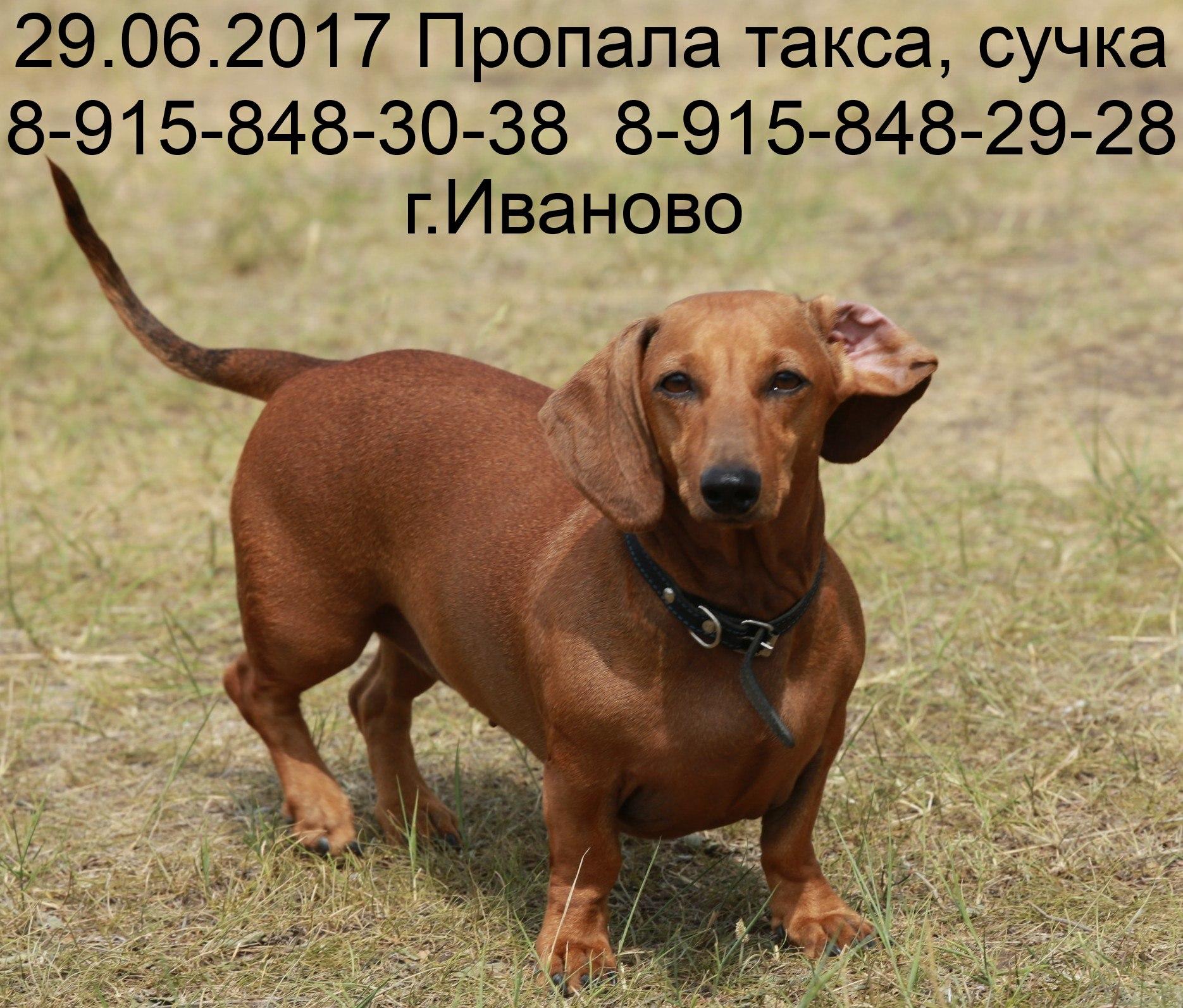 klichka-dlya-suchki-taksi